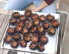 Greek delicacies are simple. Here sea urchins straight from the sea, cut in half and served with a little lemon and good bread.