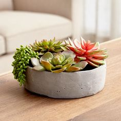 5 Self-Reliant Cool Tips: Large Artificial Plants Home artificial grass border.How To Arrange Artificial Flowers artificial plants indoor ideas. Artificial Succulents, Faux Succulents, Planting Succulents, Artificial Flowers, Succulent Plants, Succulent Display, Artificial Turf, Cacti, Fake Plants Decor