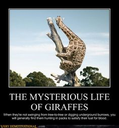 Giraffes-99% sure I already pinned this but I can't pass up a giraffe in a tree!