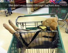 Puppy asleep in a shopping cart