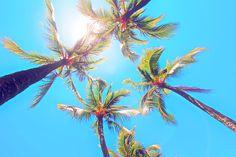 palm trees. ahhh