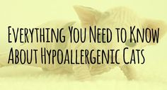 Hypoallergenic Cats: Everything You Need to Know