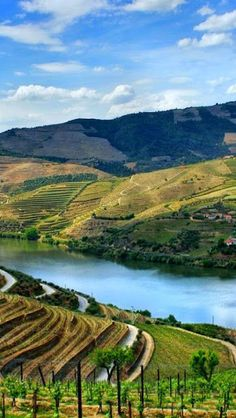 Douro valley, wine country in Portugal Douro Portugal, Visit Portugal, Portugal Travel, Spain And Portugal, The Places Youll Go, Places To Visit, Algarve, Douro Valley, Port Wine
