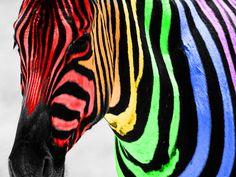 rainbow colored pictures | Free Rainbow Zebra Color Splash Wallpaper - Download The Free Rainbow ...