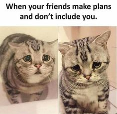 15 Fresh Memes About Cats and Dogs That Will Make Your Day - I Can Has Cheezburger? Funny Shit, Crazy Funny Memes, Funny Animal Memes, Funny Relatable Memes, Wtf Funny, Funny Animal Pictures, Funny Facts, Funny Jokes, Funny Animals