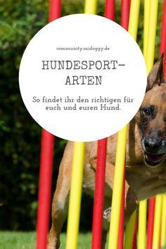 || #Hund || Ideen || #Hunde || Tipps || Tricks || Ideen || Liebe || Welpen || Bilder || Hundesport