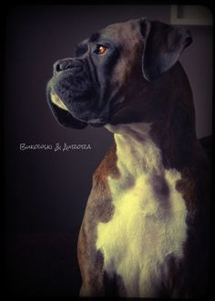 such a handsome Boxer! I miss my Sambo! I Love Dogs, Puppy Love, Cute Dogs, Funny Dogs, Beautiful Dogs, Animals Beautiful, Cute Animals, Beautiful Creatures, Boxer And Baby