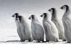 pinguin meeting...