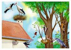 Imagini pentru imagini color cu legume de primavara Spring Pictures, Teaching Methods, Stork, Bird Feeders, Coloring Books, Christmas Cards, Preschool, Birds, Seasons