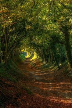 awesome 20 Amazing Beautiful Tree Tunnels Landscapes Nature will always impress us, what is more beautiful than being in a tunnel of greenery! We have selected for you 20 amazing beautiful tree tunnels t. Tree Tunnel, Magical Tree, Jolie Photo, Pathways, Nature Photos, Amazing Nature Pictures, Forest Pictures, Beautiful Landscapes, Beautiful Places