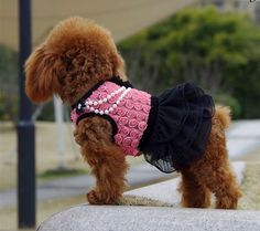 Find More Dog Dresses Information about 2015 small/big dog clothes wedding dresses girl chihuahua,yorkshire,teddy,poodle pet products clothing for summer cute grooming,High Quality clothing labels for kids,China product Suppliers, Cheap clothing clip art free from pet clothes store on Aliexpress.com