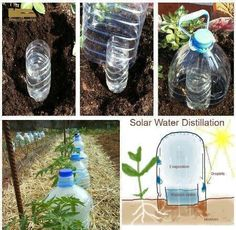 "Drip bottle irrigation - me encanta! Growing Vegetables with 10 times less water – ""Solar Drip Irrigation"" an experime - Organic Gardening, Gardening Tips, Vegetable Gardening, Vegetable Ideas, Texas Gardening, Veggie Gardens, Urban Gardening, Potager Bio, Drip Irrigation"