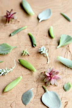 How to Grow Succulents From Cuttings Propogate Succulents, Succulent Cuttings, Succulents Garden, How To Grow Cactus, Propagation, Green, Plants, Porch, Outdoors