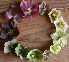 hellebores.  i remember these fondly from my april visits to seattle.