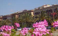 A Cagliari la natura si fonde con l'architettura in un mix di colori e profumi unici. (Via Roma - fronte Porto - CA)