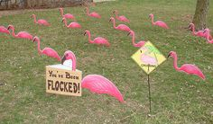 Run a Flamingo Fundraiser - wikiHow