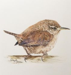 original fine art by Gayle Mason, galleries of dogs , cats and wildlife in pastel and coloured pencil., limited edition giclee prints and fine art cards Watercolor And Ink, Watercolor Paintings, Original Paintings, Watercolor Ideas, Watercolors, Baby Sparrow, Nature Journal, Bird Pictures, Vintage Birds