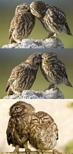 Assur O'Poil vous présente ce couple tellement mignon !