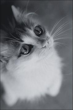 Unfathomable eyes by govorit-vsluh on deviantART. °