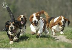 "Analogy: ""Basset Hounds Running"""