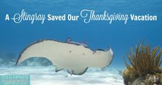 A Thanksgiving vacation that could have gone horribly wrong was saved by a stingray, of all things.