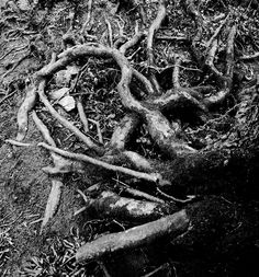 root... yep its a drawing.................