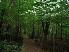 Woods and trails on the campus....Indiana University Bloomington