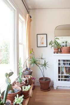 Succulent Garden - Spruce Up Your Windowsills For The Season - Photos