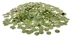 ACUÁTICAS Waterlily Pond PNG by EveLivesey