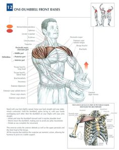 Single Dumbbell Front Raises ♦ #health #fitness #exercises #diagrams #body #muscles #gym #bodybuilding #shoulders