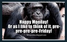 Funny Monday Quotes to be Happy on Monday Morning - Funny Animal Quotes - - Happy Monday! Or as I like to think of it pre-pre-pre-pre-Friday! The post Funny Monday Quotes to be Happy on Monday Morning appeared first on Gag Dad. Funny Monday Memes, Happy Monday Quotes, Monday Humor Quotes, Friday Meme, Its Friday Quotes, Happy Monday Funny, Monday Morning Humor, Funny Memes, 9gag Funny