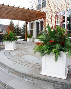 flores del sol: christmas container plantings with red twig dogwood. love these containers!