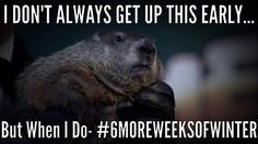 get your laugh on to Funny Groundhog Memes! Happy Groundhog Day, Funny Memes, Hilarious, Hollywood Life, I Laughed, Picture Video, Laughter, Comedy, Funny Pictures
