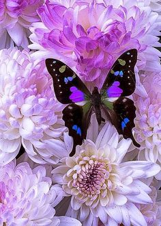"Butterfly:  ""Colourful Colours!"""