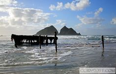 We need to find this ship wreck when we're at Holywell Bay in the summer! Holiday Cottages In Cornwall, North Cornwall, Newquay, Holiday Accommodation, Shipwreck, Life Is Good, Surfing, Mountains, Beach
