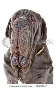 neo mastiff