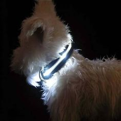 "Have it in pink an blue ""LED Lighted Dog Collar""perfect for my rotties Led Dog Collar, Dog Collars, Gadgets, Collor, Four Legged, Cool Stuff, Mans Best Friend, Puppy Love, Just In Case"