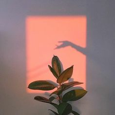 Plants aesthetic light 34 Trendy ideas – Photography – … – Best Home Plants Aesthetic Light, Orange Aesthetic, Aesthetic Beauty, Aesthetic Plants, Jolie Photo, Aesthetic Pictures, Wall Collage, Picture Wall, Aesthetic Wallpapers