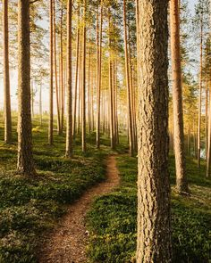 Joonas Linkola. Finland, Country Roads, Plants, Summer, Mornings, Instagram, Travel, Summer Time, Viajes