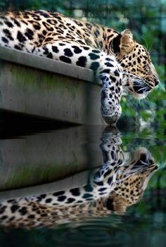 beautiful reflection