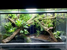 Great Pics Reptile Terrarium setup Strategies There's no question in which possessing a pet will bring untold delight so that you can a persons life. Reptile Room, Reptile Cage, Reptile Enclosure, Terrarium Reptile, Terrarium Diy, Les Reptiles, Reptiles And Amphibians, Vivarium, Aquariums