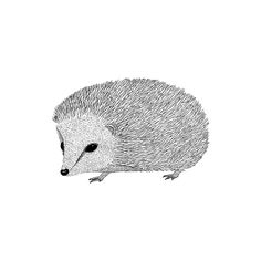 HEDGEHOG Ink illustration Print & pillow available at: http://www.society6.com/annalindner http://www.annalindner.com