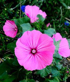 Le rose de cette fleur est comme le rose de mon cœur