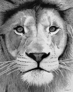 Pointillism Lion. This is so intense. I love it!