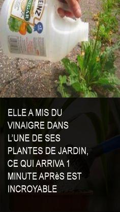 Elle a mis du vinaigre dans l'une de ses plantes de jardin, ce qui arriva 1 minute après est incroyable Plantar, Less Is More, Horticulture, House Plants, Minute, Natural, Personal Care, Plantation, Garage