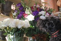 Flowerdog