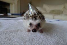 Yaaaaay!   Animals Wearing Party Hats