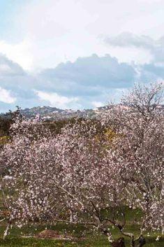 ¿A dónde te puedes escapar este mes de marzo? Portugal es uno de los destinos más bonitos durante la primavera, gracias a sus campos de almendras. De hecho, este año en Algarve se celebra el Primer Festival del Almendro en Flor, ¿te lo vas a perder?  ¡Haz clic para descubrir más destinos! Algarve, Portugal, Nature, Travel, Fields, Flower, March Month, Wonders Of The World, Almonds