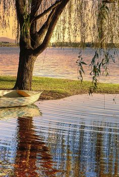 At the lake..weeping willow!