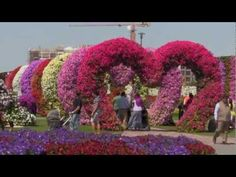 Largest Flower Garden in UAE . Miracle garden in Dubai . Garden Soil, Vegetable Garden, Garden Plants, Garden Landscaping, Botanical Art, Botanical Gardens, Large Flowers, Beautiful Flowers, Dubai Garden